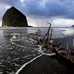 Driftwood Washed Ashore