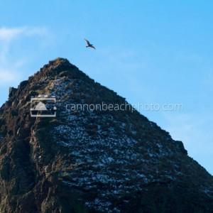 Snow on Top of Haystack Rock