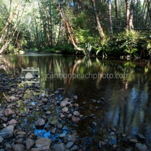 Sunlit Ecola Creek