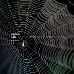 Morning Spider Web