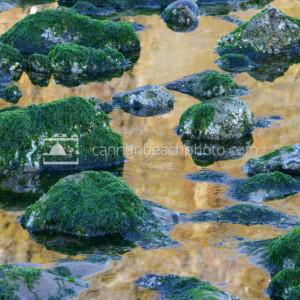 Tidepools Below the Rock