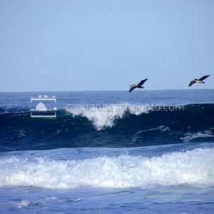 Pelican Flight Over Cresting Waves