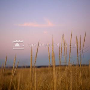 Serene Sand Dune, Yellow Dune Grass