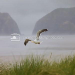 Seagull Flight on a Foggy Day