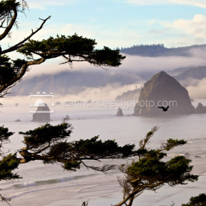 Crow Flight with Haystack Rock, Oregon Coast