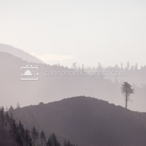 Cannon Beach Hills - Lone Tree in the Mist