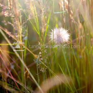 Coastal Flower Macro