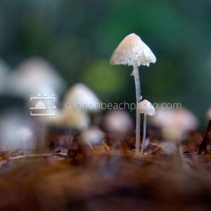 Mushroom Close Up, Forest Macro