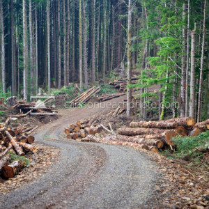 Oregon Forest Clearcut