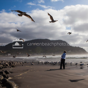 Birds in Motion – Seaside, Oregon