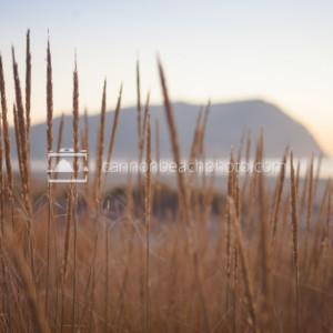 Dune Grass an Tillamook Head