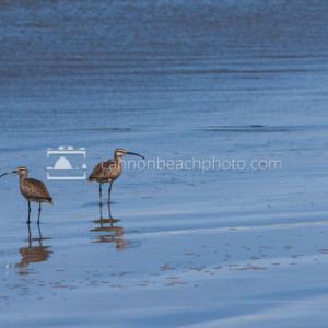 Sandpipers on the Seashore