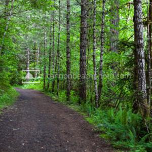Forest Trail, Springtime
