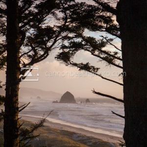 Oceanfront View Thru the Trees, Vertical