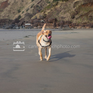 Pet Friendly Beach Dog 2