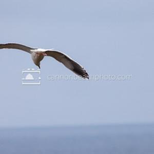 Seagull Flight Back