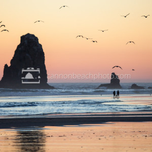 Seagulls Flight Over The Needles, Oregon Coast Sunset 2