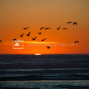 Silhouetted seagulls soar silently above the sublime sea at sunset