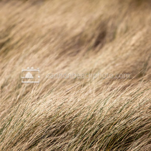 Golden Autumn Dune Grass