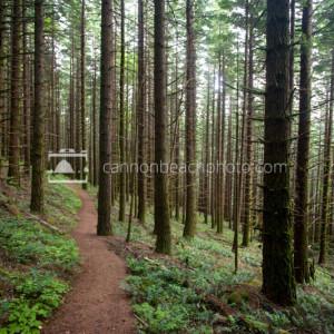Trail Thru the Woods