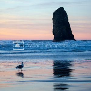 Seagull Stroll Sunset at Needles