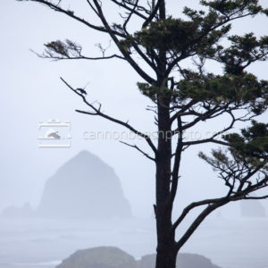 Crow Flight at Ecola State Park