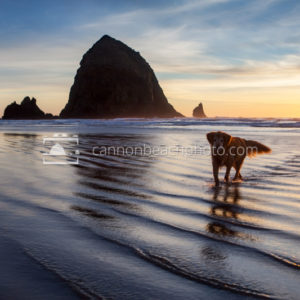 Dog Walk at Haystack Rock