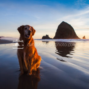 Pet Friendly Cannon Beach