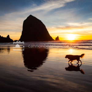 Pet Friendly Cannon Beach, Oregon Coast