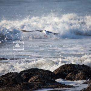 Seaside Seagull Flight