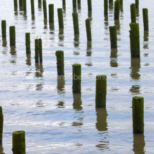 Astoria Columbia River Pilings
