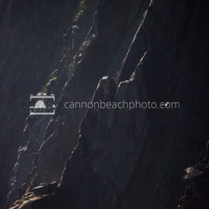 Bird Flight Along the Cliffs