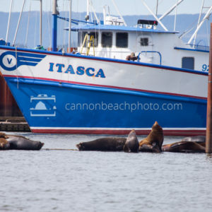 Itasca Boat and Sea Lions