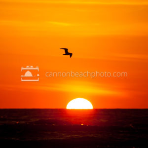 Lone Seagull at Sunset