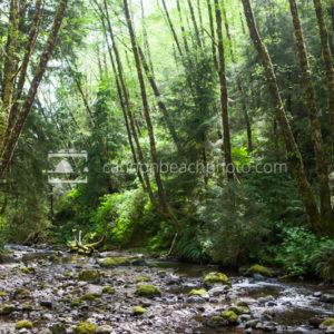 Lush Greens of Ecola Creek