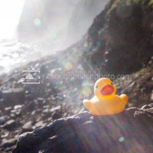 Rubber Ducky on Rocky Shore