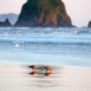 Sandpipers and Haystack Rock, Vertical