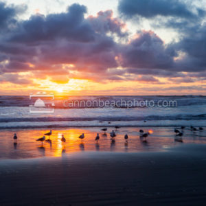 Seagull Shore at Sunset 1