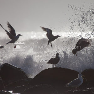 Seagulls Escape an Incoming Wave 2