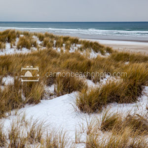 Snow and Dune Grass