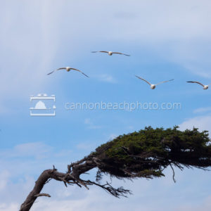 Windswept Tree and Seagulls