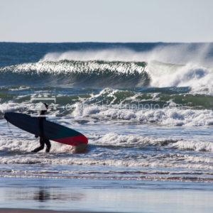 LongBoard Surfer Heading Out on the Oregon Coast