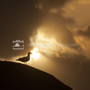 Seagull Perch Silhoutted by Sun