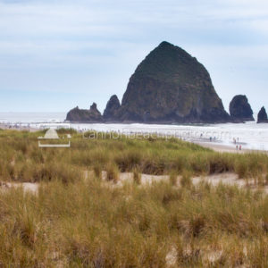 Cannon Beach Early Summer Dune View