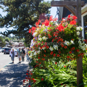 Flower Pots Downtown Cannon Beach, Mid-Summer 2