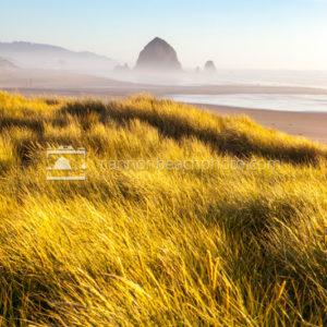Dune View, Cannon Beach, Oregon, Vertical
