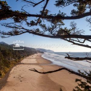 Oregon Coast View and Pine Tree Framing