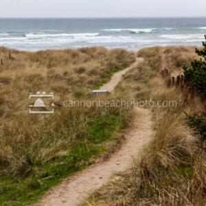 Beach Path, Chapman Point