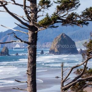 Haystack Rock Framed by the Trees