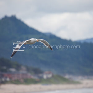 Seagull Flight with Cannon Beach Hills